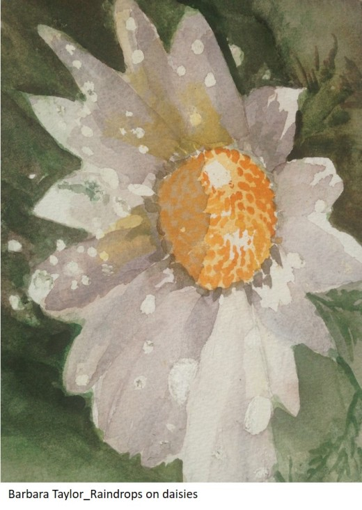 Barbara Taylor_Raindrops on daisies
