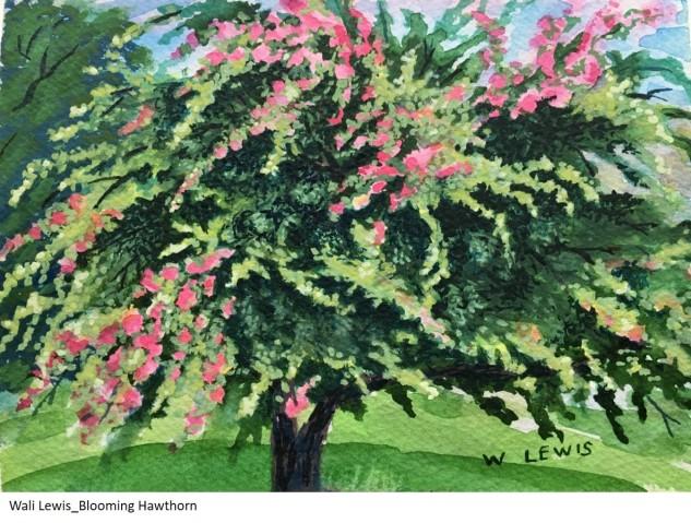 Wali Lewis_Blooming Hawthorn